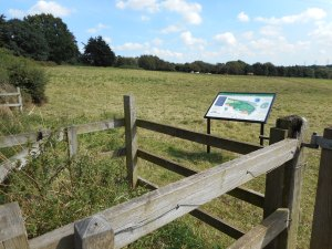 Picture - Belstead Meadows
